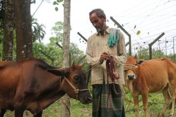 Abdul Jalil tends to his cows near a barbed-wire fence along the India-Bangladesh border.
